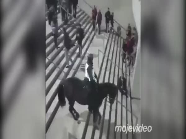 Nenařizujte koním chodit po schodech