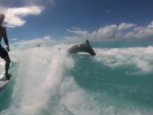 Surfování s delfíny