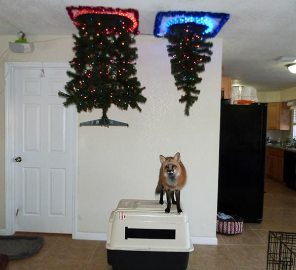 GALERIE - Vánoční stromečky proti zvířátkům 1