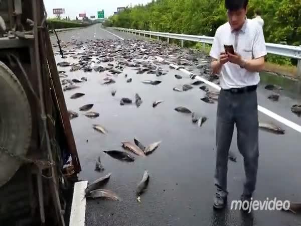 Pozor, sumci na silnici