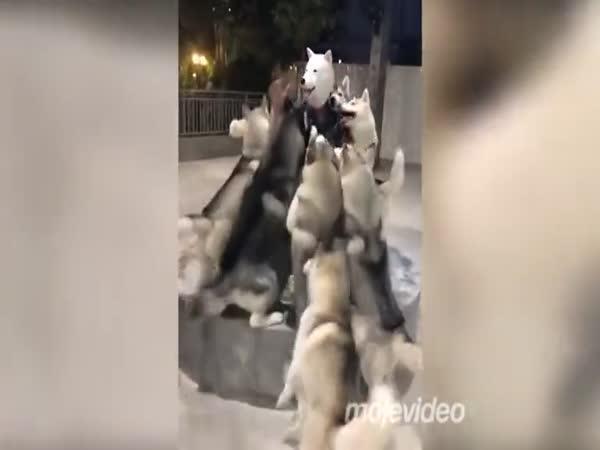 V jaké masce jít mezi psy?