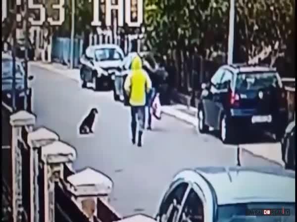 Pes zabrání loupeži