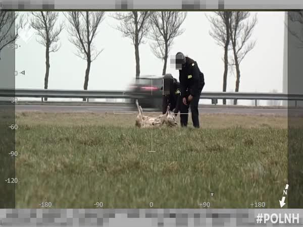 Policie zachraňuje ovci