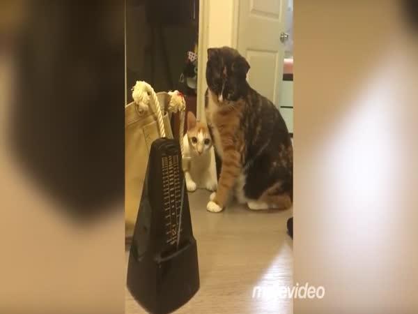 Kočky se bojí metronomu