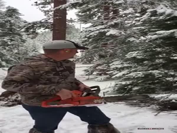 Řezání stromečku v USA