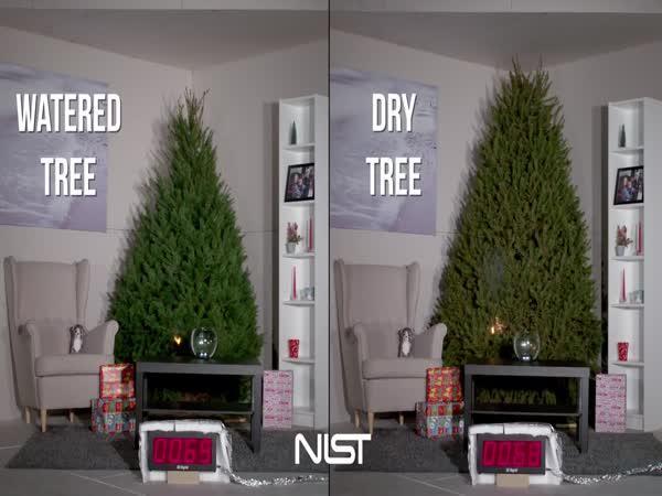 Který vánoční stromek shoří dříve?