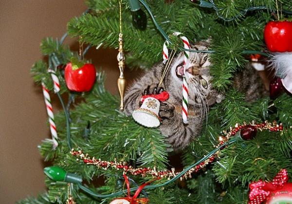 GALERIE – Zvířata, která zničila Vánoce