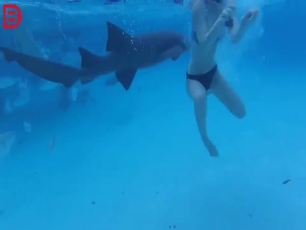 Setkání se žralokem #21