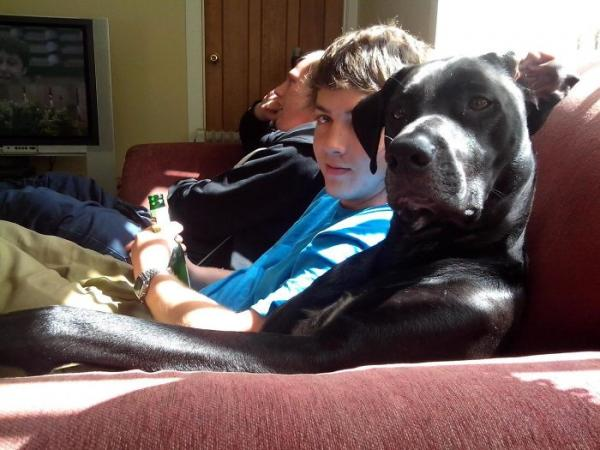 GALERIE - Psi, co se chovají jako lidi