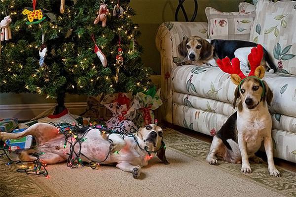 GALERIE - Zvířátka, která milují Vánoce