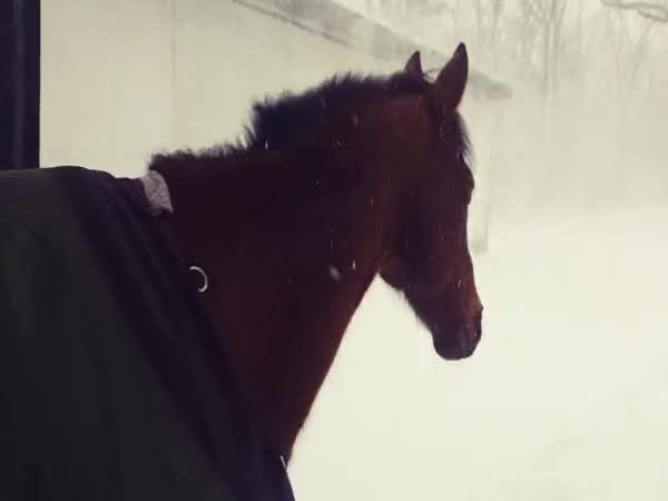 Koně se těšili do výběhu