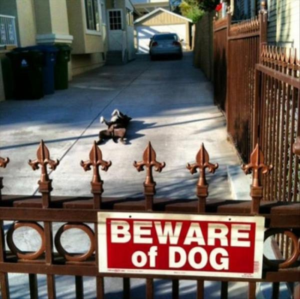 GALERIE – Vtipné ,,Pozor zlý pes