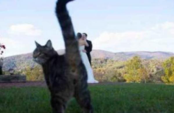 GALERIE - (Ne)povedené svatební fotky 2
