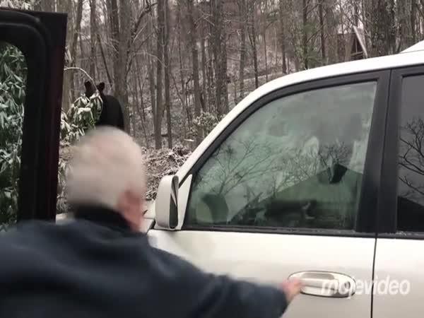 Jak dostat medvěda z auta?