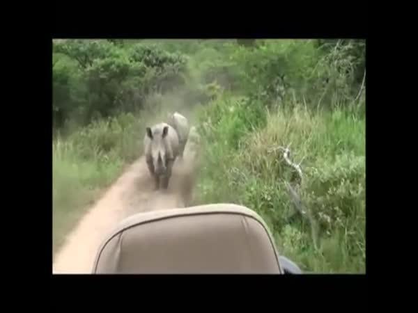 Nosorožci vs. auta