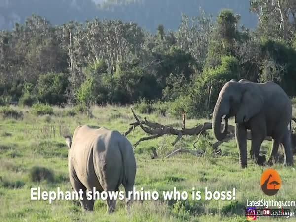 Krugerův národní park 2017