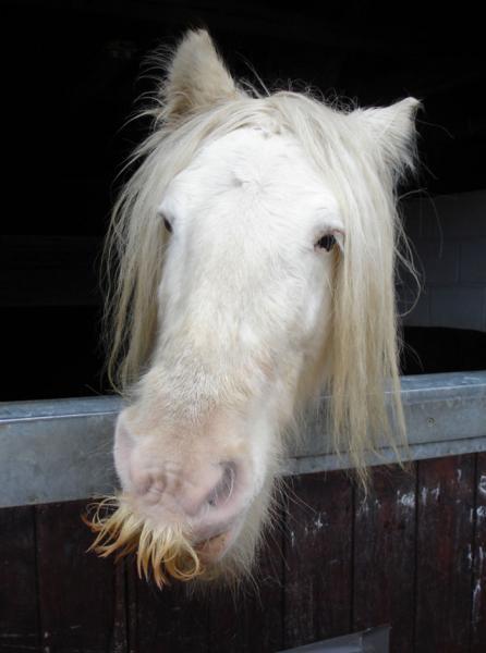 GALERIE - Rozkošné koňské kníry 1