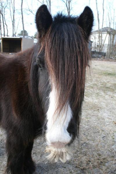 GALERIE - Nej kníry mají koně 2