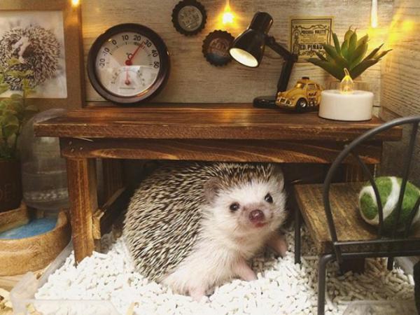 GALERIE - Rozkošná fota ježečků
