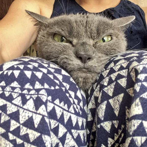 GALERIE - Nejnaštvanější kočka