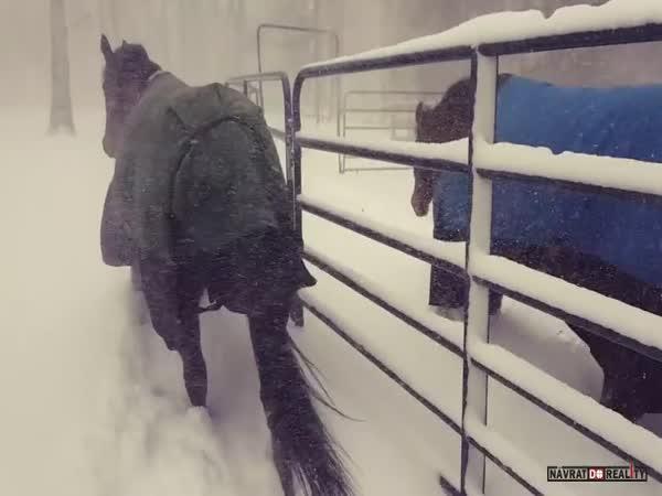 Koně vs. sníh