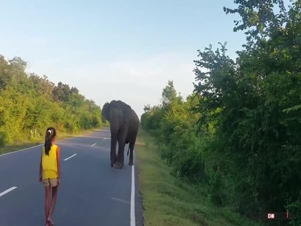 Dívka versus slon