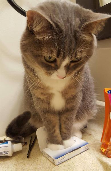 GALERIE - Kočky, které se vejdou všude