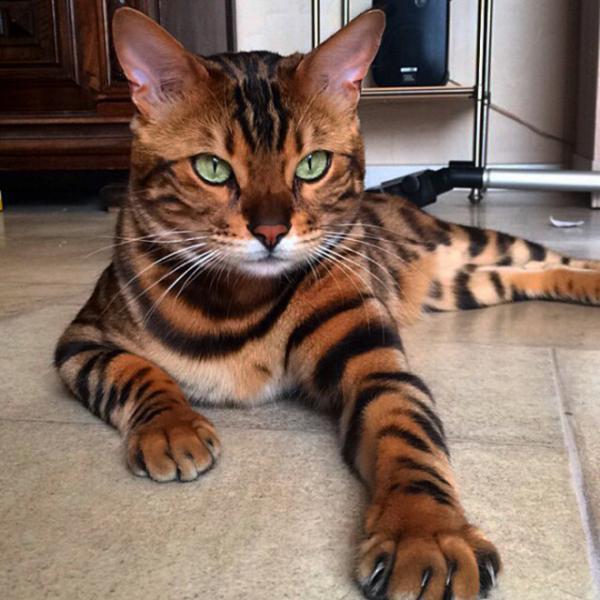 GALERIE - Kočky kralují Instagramu