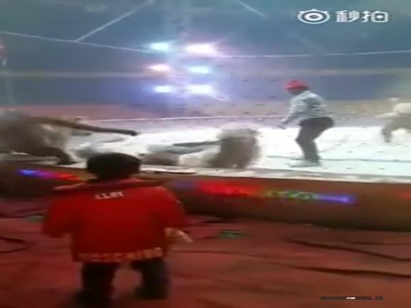 Napadený kůň v Číně