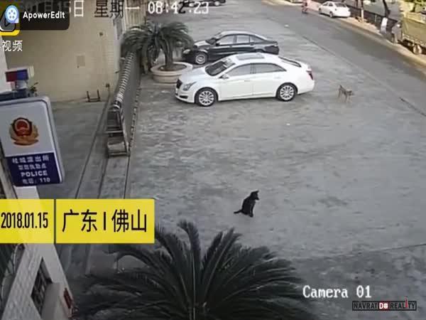 Krádež psa v Číně
