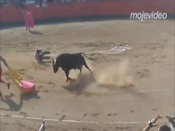 Aktivista na býčích zápasech