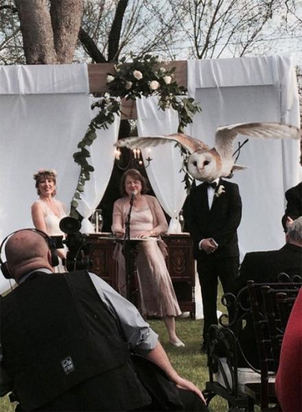 GALERIE - 14 zkažených fotek novomanželů