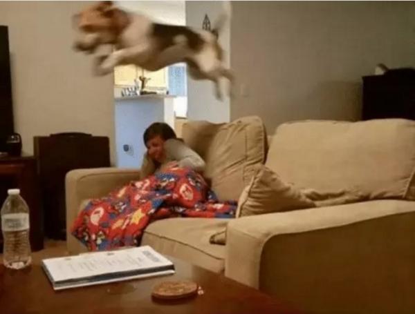 GALERIE – Vtipná psí galerie vás dostane