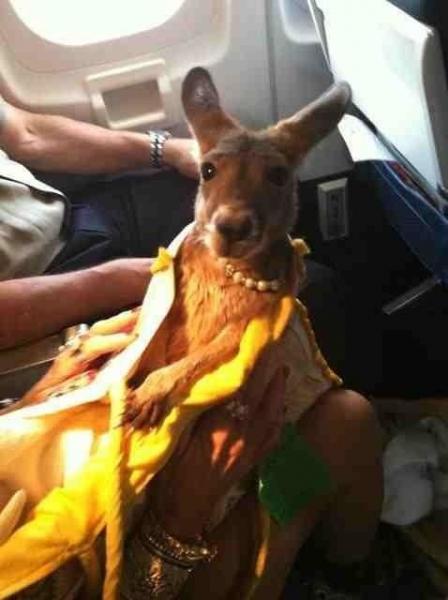 GALERIE - 11 nezvyklých zvířat v letadle