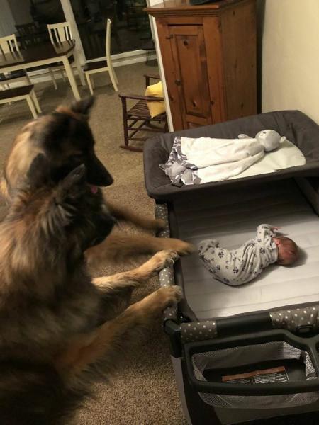 GALERIE - Psi jsou úžasní hlídači