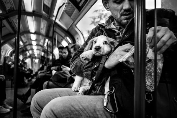 GALERIE - Člověk fotil psí duše do černobílých fotek