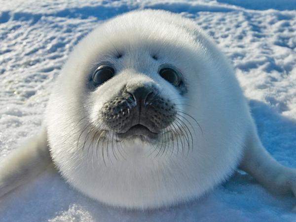 GALERIE – Roztomilí tuleni vás dostanou