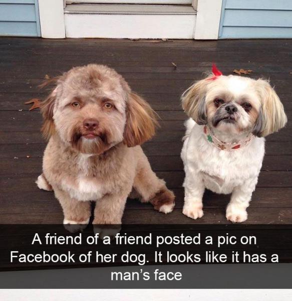 GALERIE – Pejsci na Snapchatu