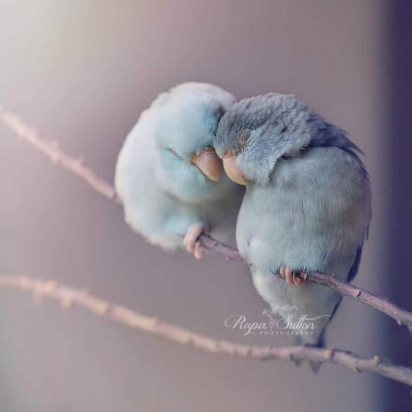GALERIE – Ptačí láska