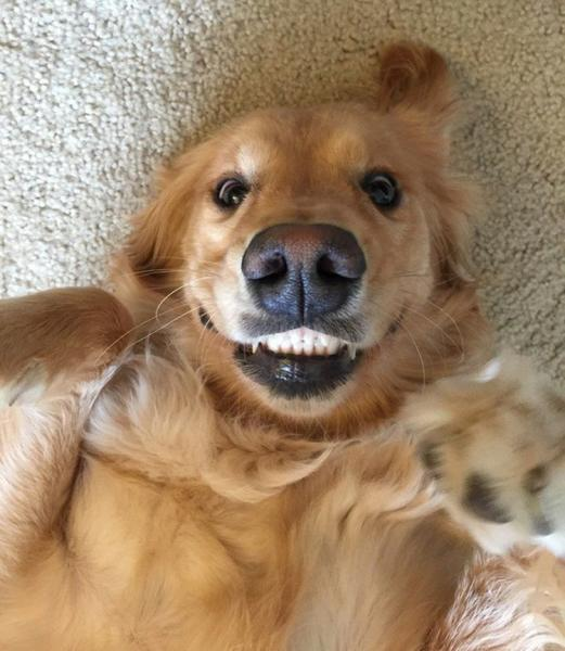 GALERIE – Psí úsměvy od ucha k uchu