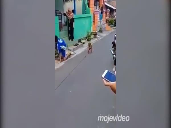 Pojišťovna mu nevěří, že ho srazil makak