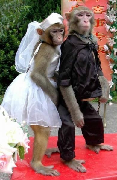 GALERIE – I zvířata mají nárok na svatbu