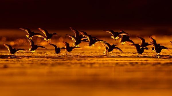 GALERIE - Fotky ptáků, co vám vyrazí dech