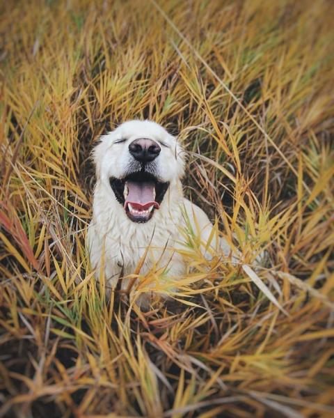 GALERIE - Pes, nejlepší přítel člověka #6