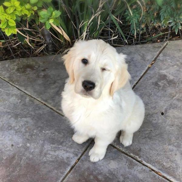 GALERIE - Pes, nejlepší přítel člověka #7