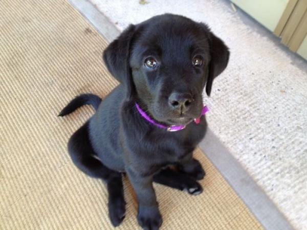 GALERIE - Pes, nejlepší přítel člověka #9