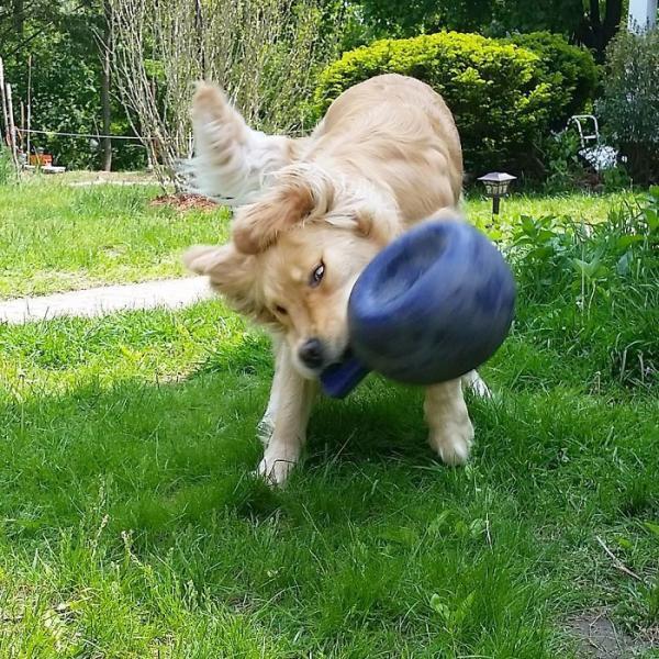 GALERIE - Pes, nejlepší přítel člověka #10