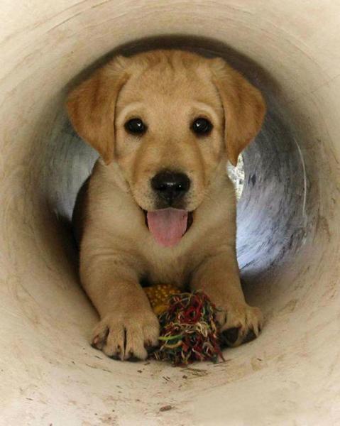 GALERIE - Pes, nejlepší přítel člověka #11