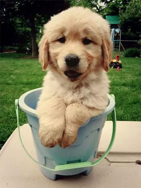 GALERIE - Pes, nejlepší přítel člověka #12