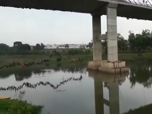 Brazílie: Hromadný skok z mostu